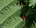 Ladybug Emerging